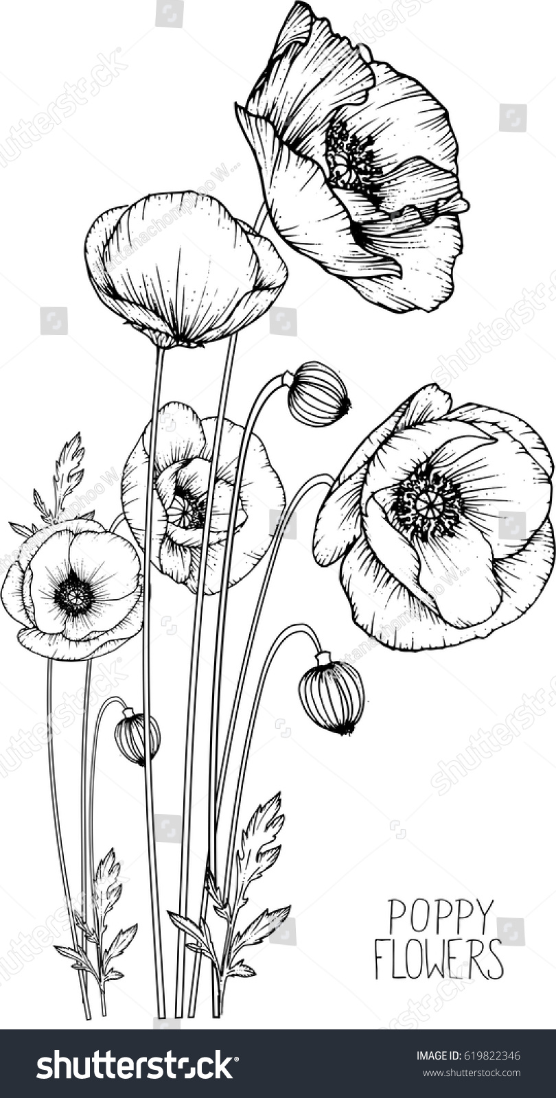 Flowers Drawing Poppy Flower Vector Illustration Stock Vector