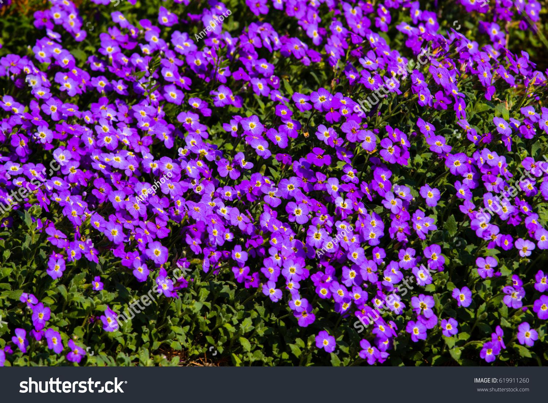 Communication on this topic: Wanda Osiris, lila-flowers/