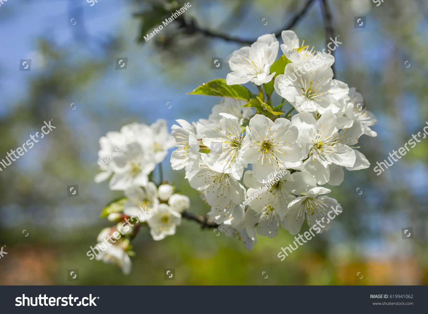 White Tree Flowers In Spring Ez Canvas
