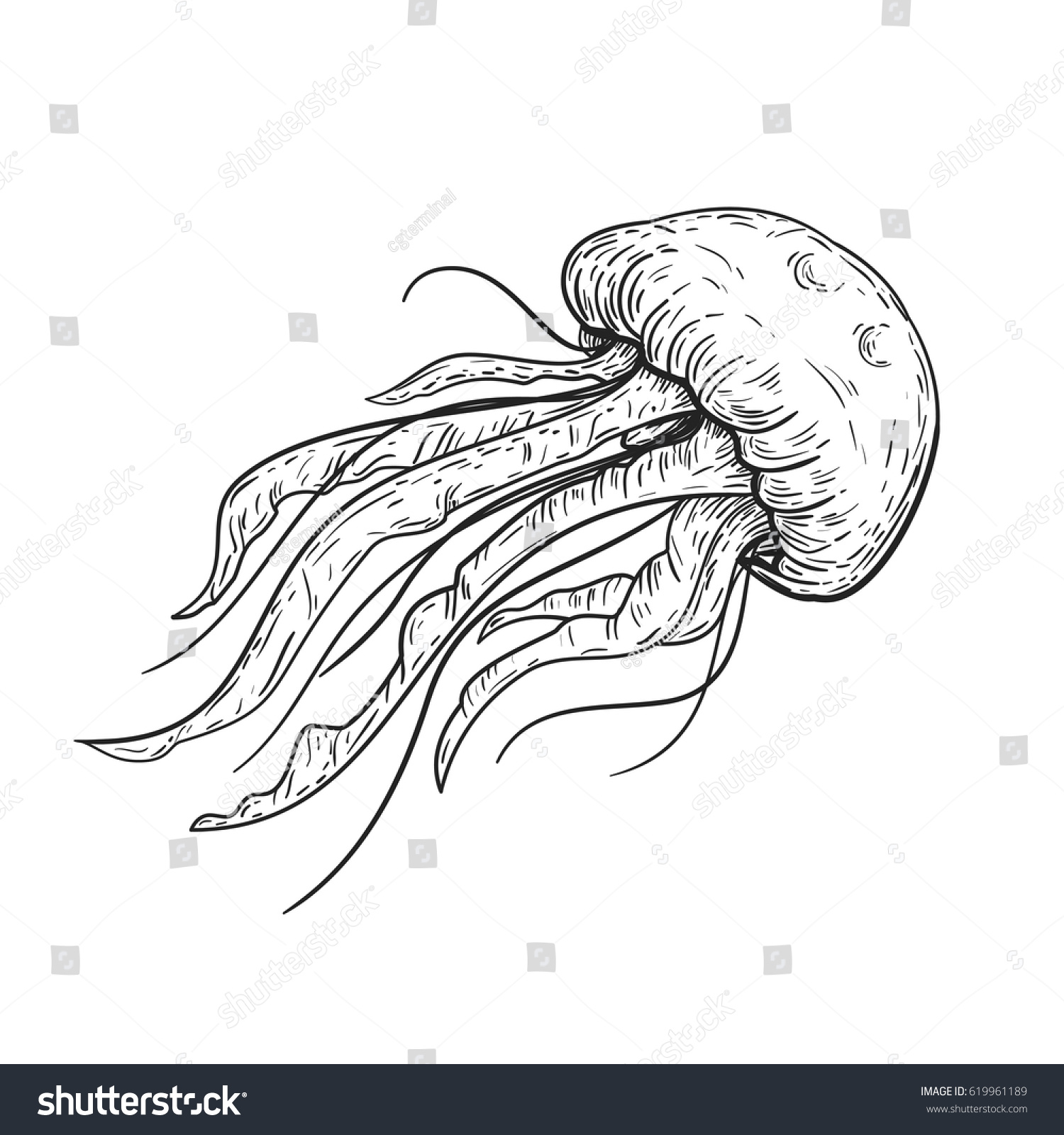Line Art Jellyfish : Hand drawn vector sketch jellyfish vintage stock