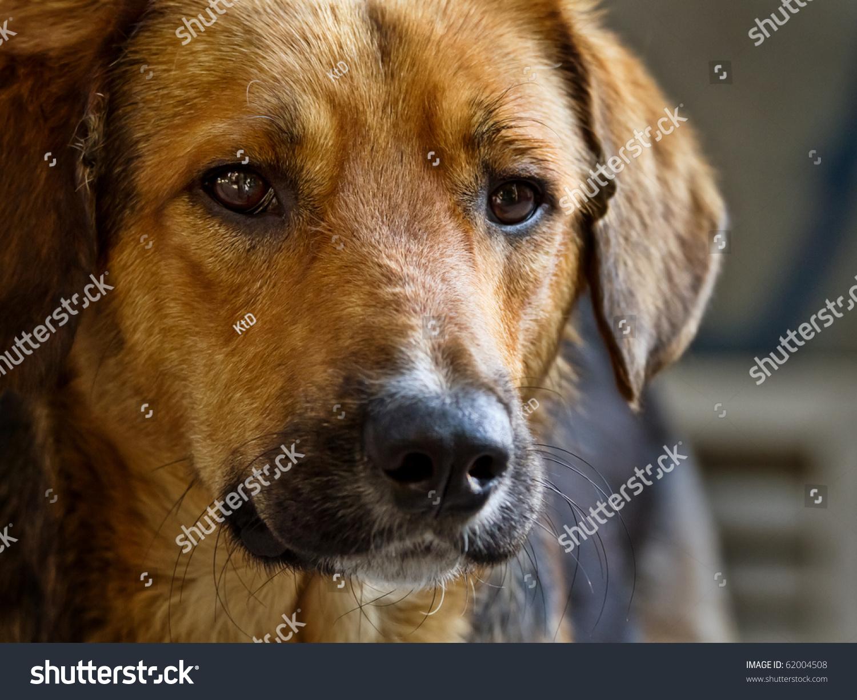 Sad Stray Dog Posing On The Street Stock Photo 62004508 ...