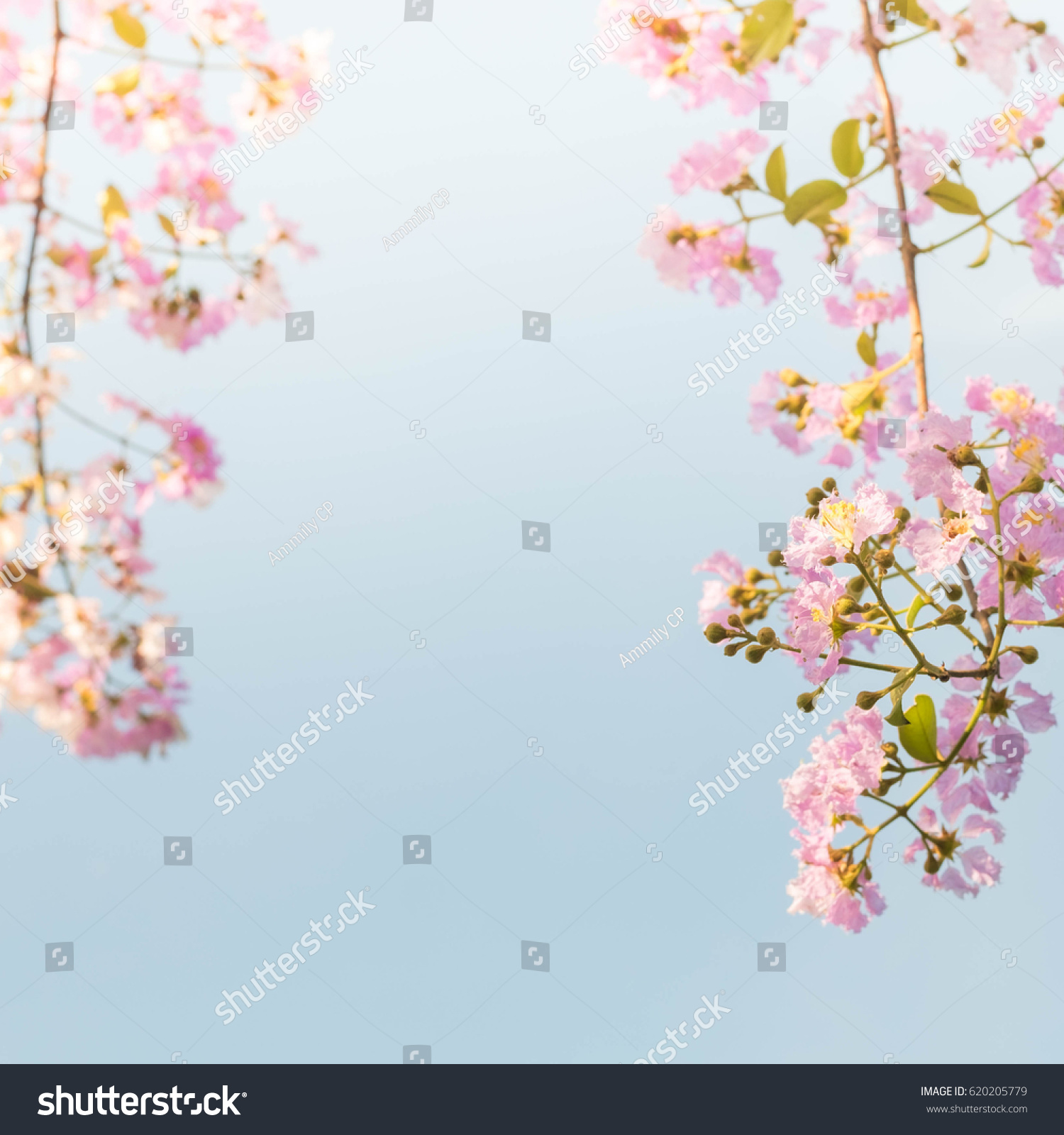 Tropical Pink Flower Over The Blue Sky In Spring Ez Canvas