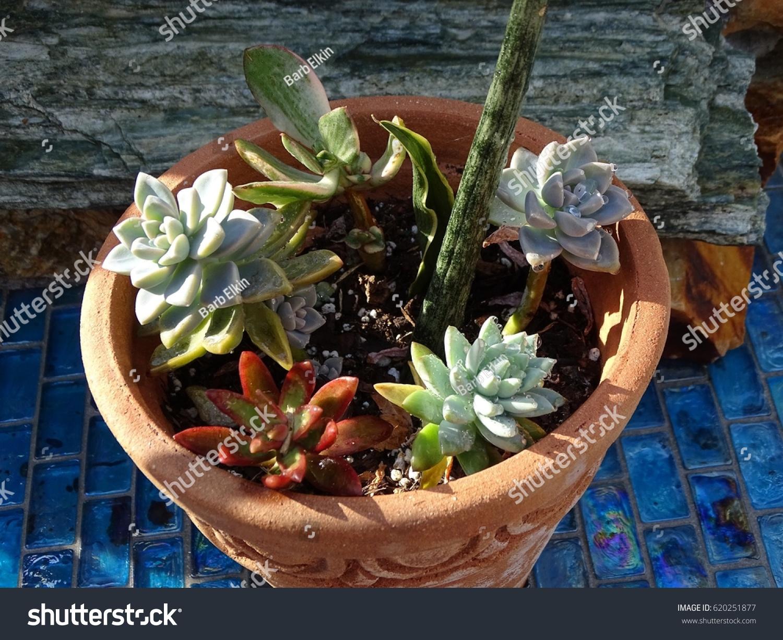 Succulent Container Garden On Blue Tile Stock Photo Edit Now