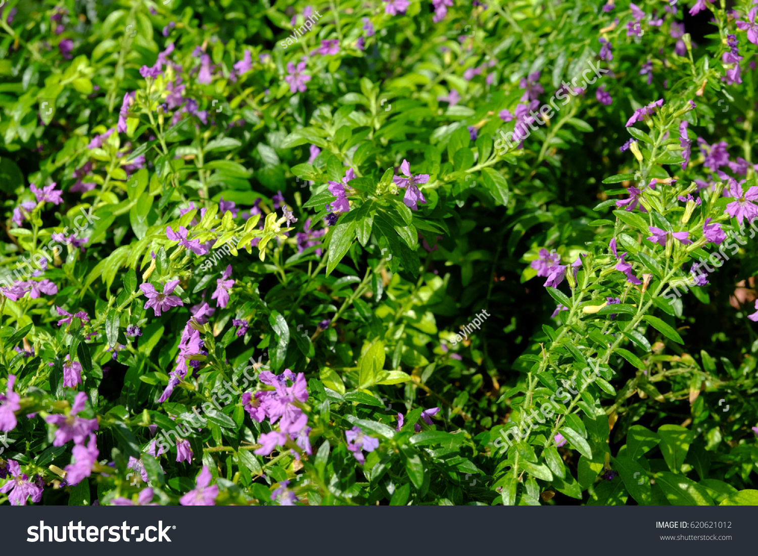 Plant small pink flowers green leaves stock photo edit now plant with small pink flowers and green leaves mightylinksfo