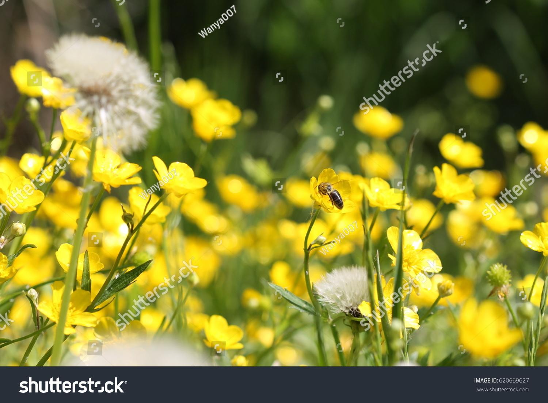 Wonderful Yellow Flowers Shimmering Satin Yellow Stock Photo