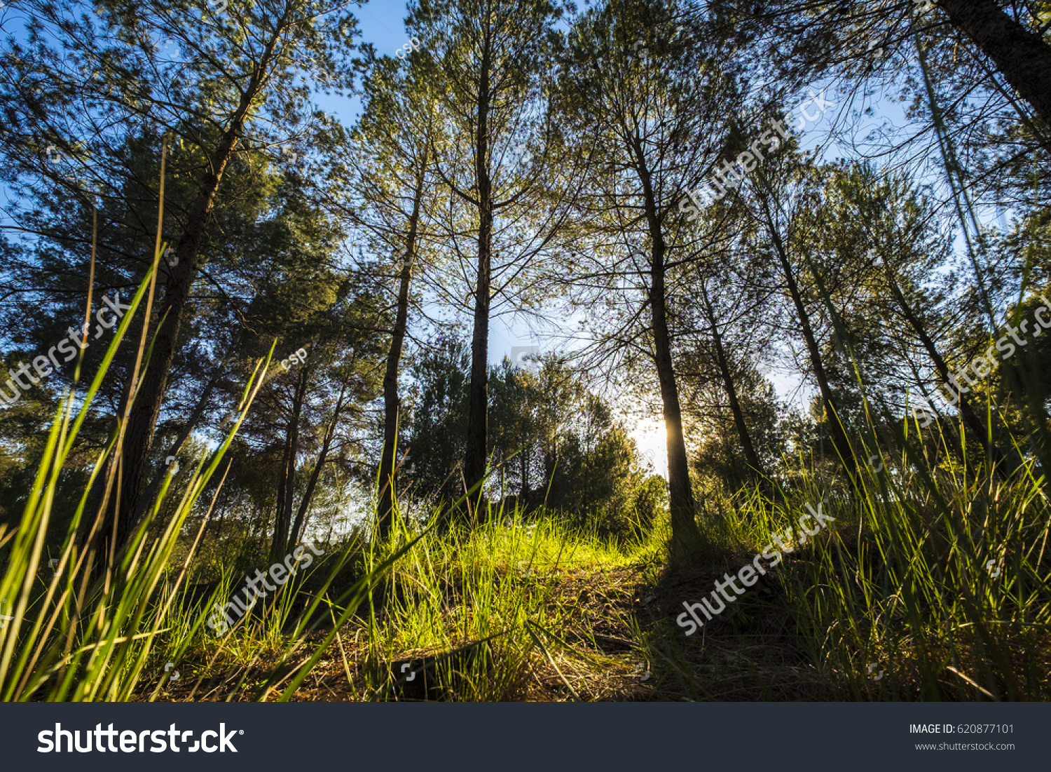 Volpelleres Forest Sant Cugat Del Valles Stock Photo Edit Now