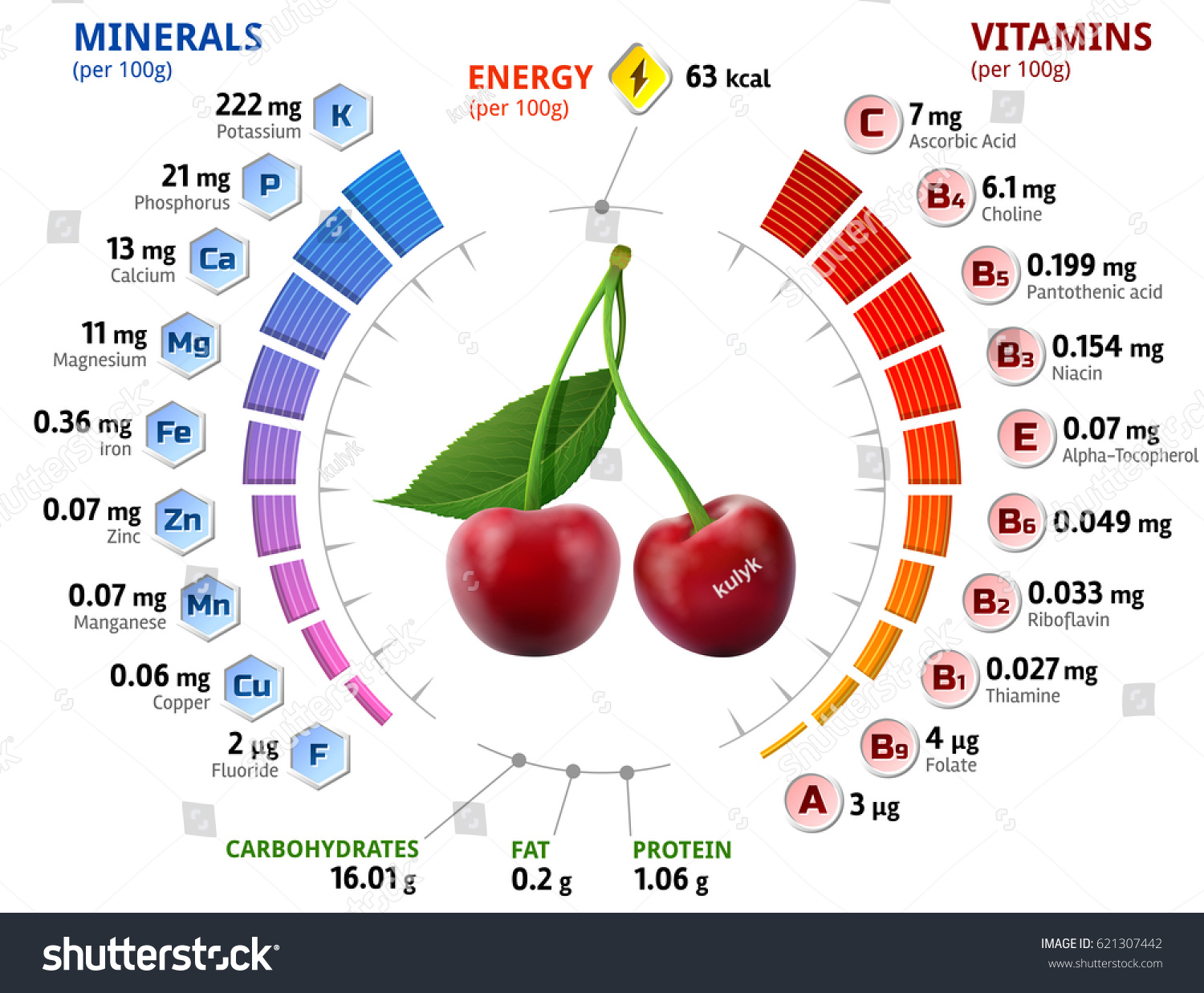 vitamins minerals cherry fruit infographics aboutのイラスト素材