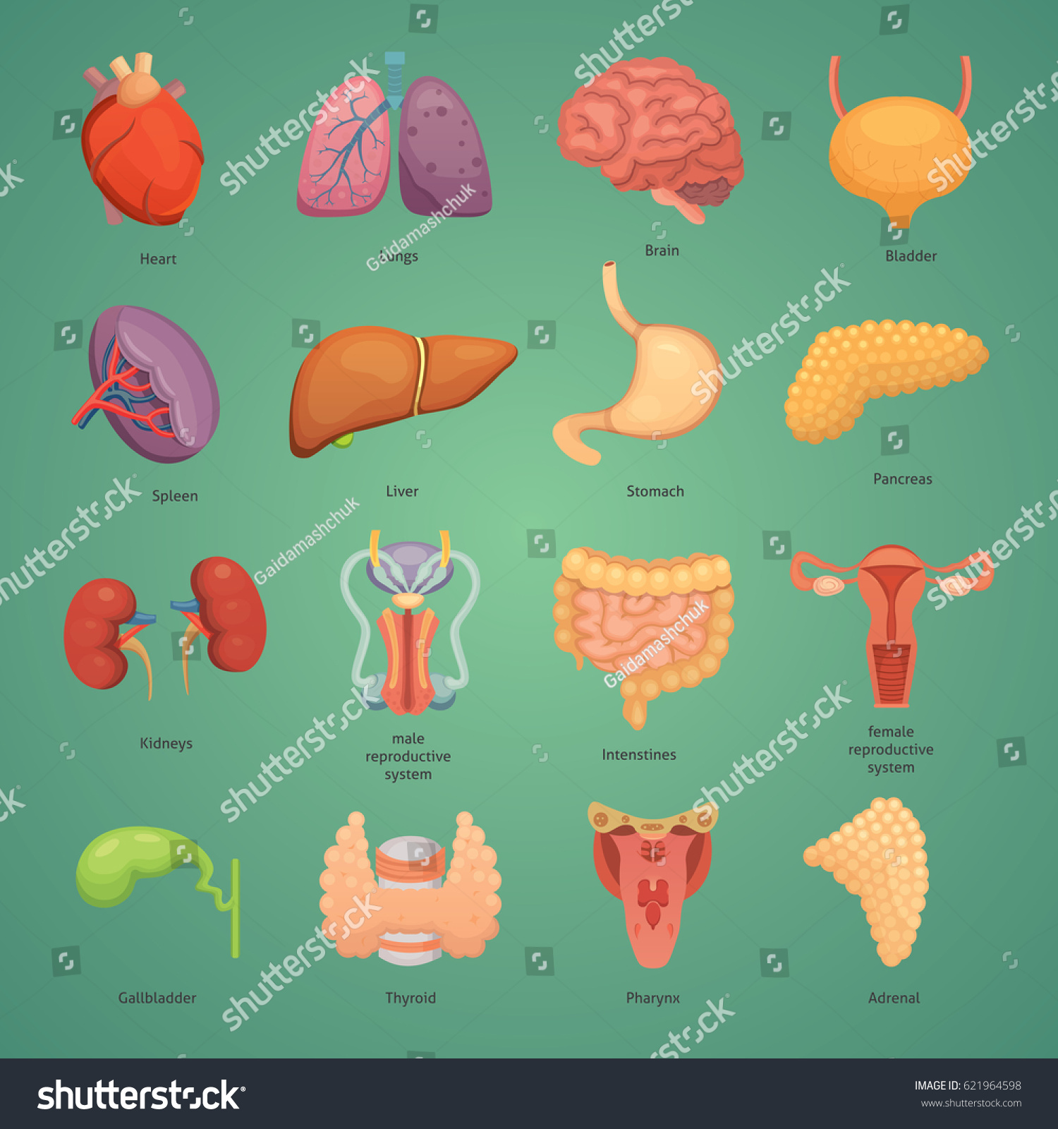 Cartoon Human Organs Set Anatomy Body Stock Vector (Royalty Free ...