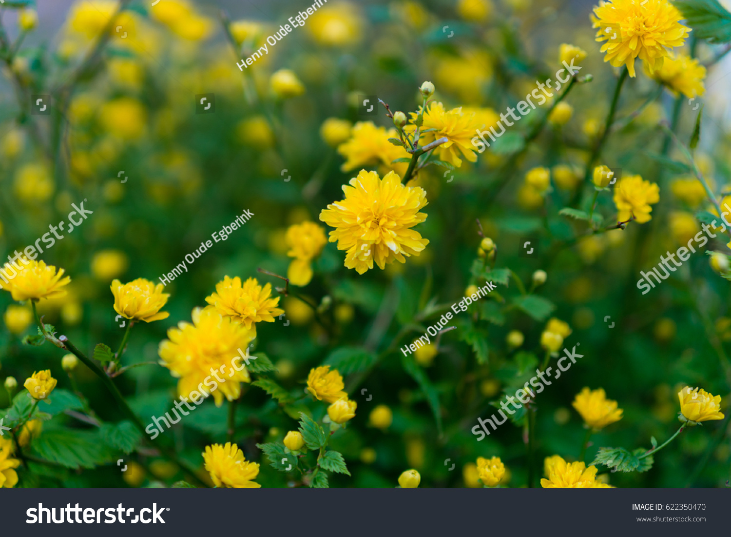 Wild Spring Flowers On Sunny Day Stock Photo Edit Now 622350470