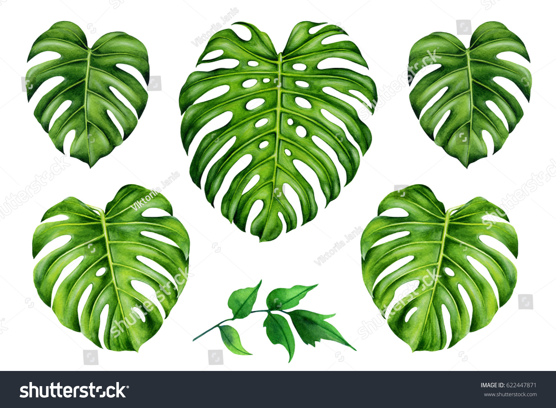 Set Tropical Leaves Green Monstera Leaf Stock Illustration