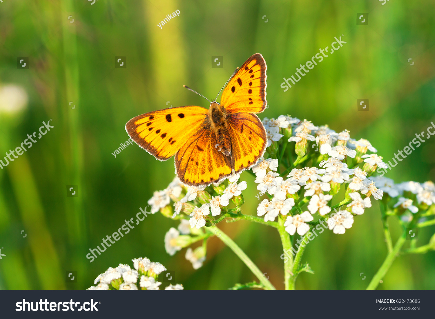 Beautiful Orange Butterfly Sits On Whites Stock Photo Edit Now