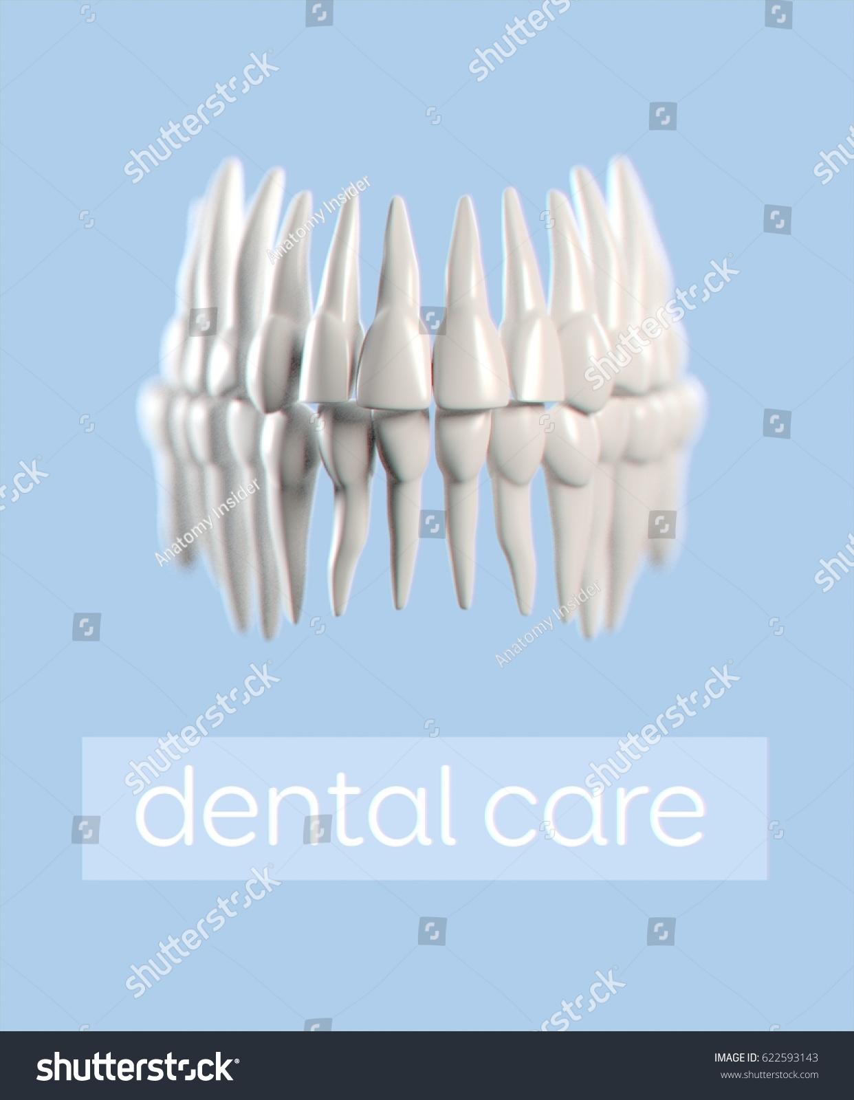 Nett Human Teeth Anatomy Zeitgenssisch Menschliche Anatomie
