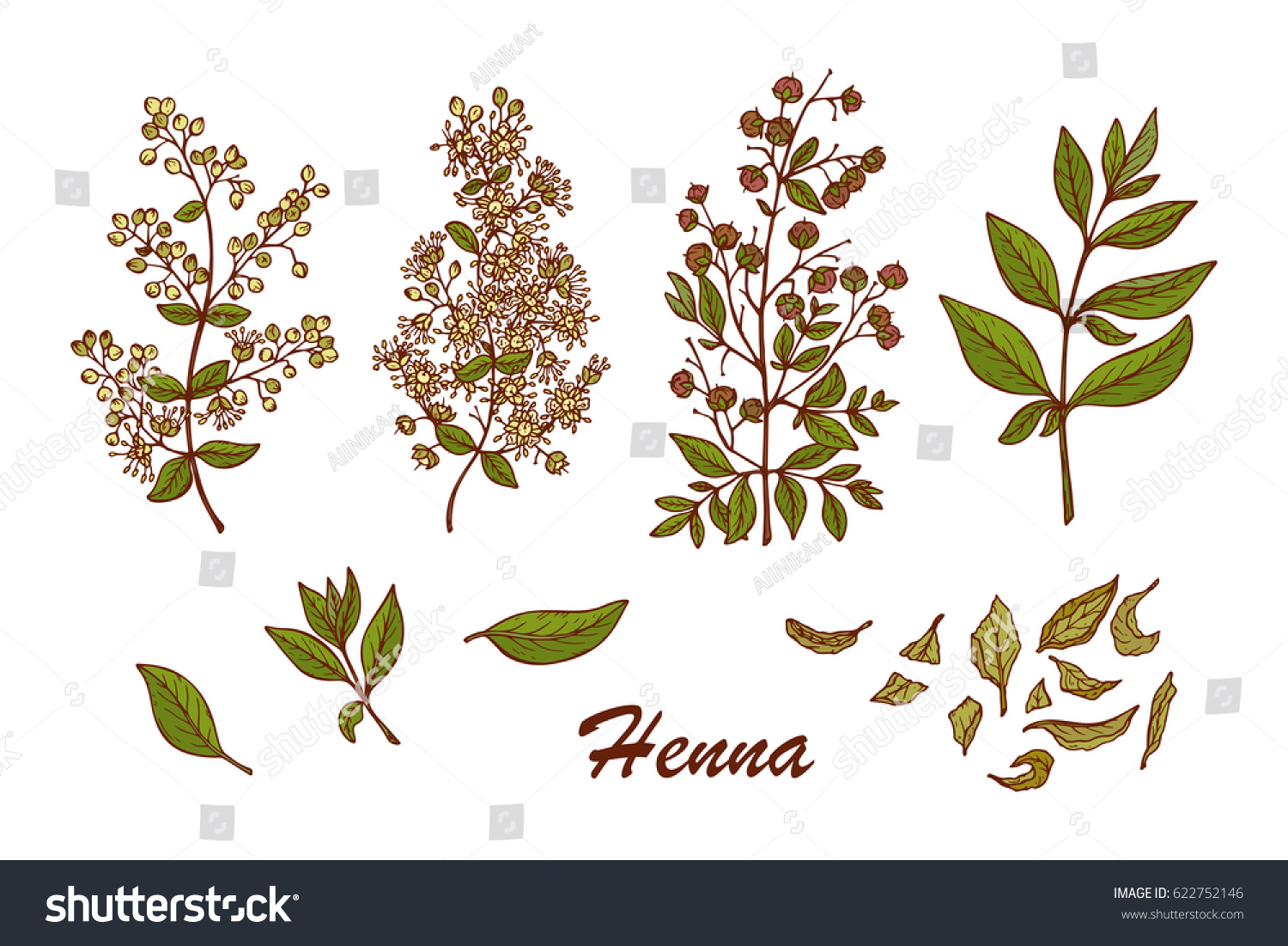 Medicinal Plants Vector Set Henna Lawsonia Stock Vector Royalty