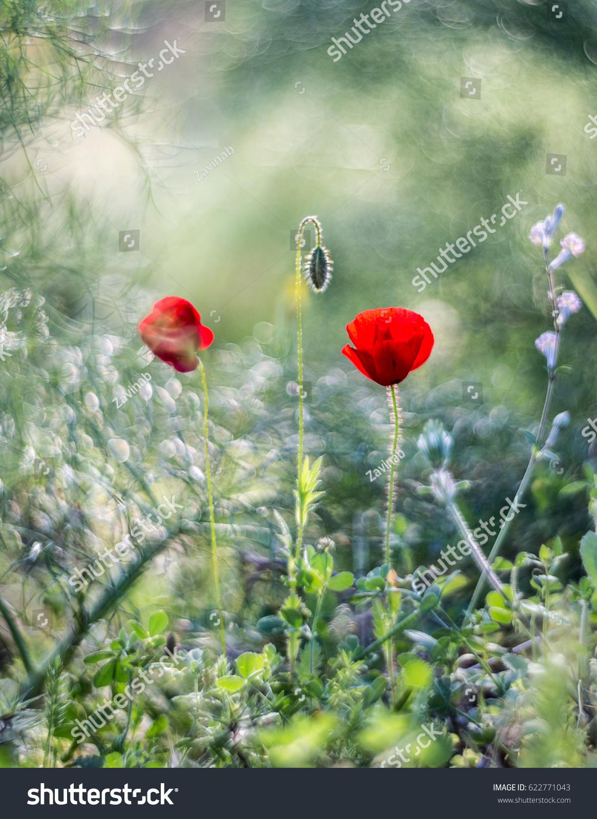 Earliest Spring Flowers Sun Stock Photo Royalty Free 622771043