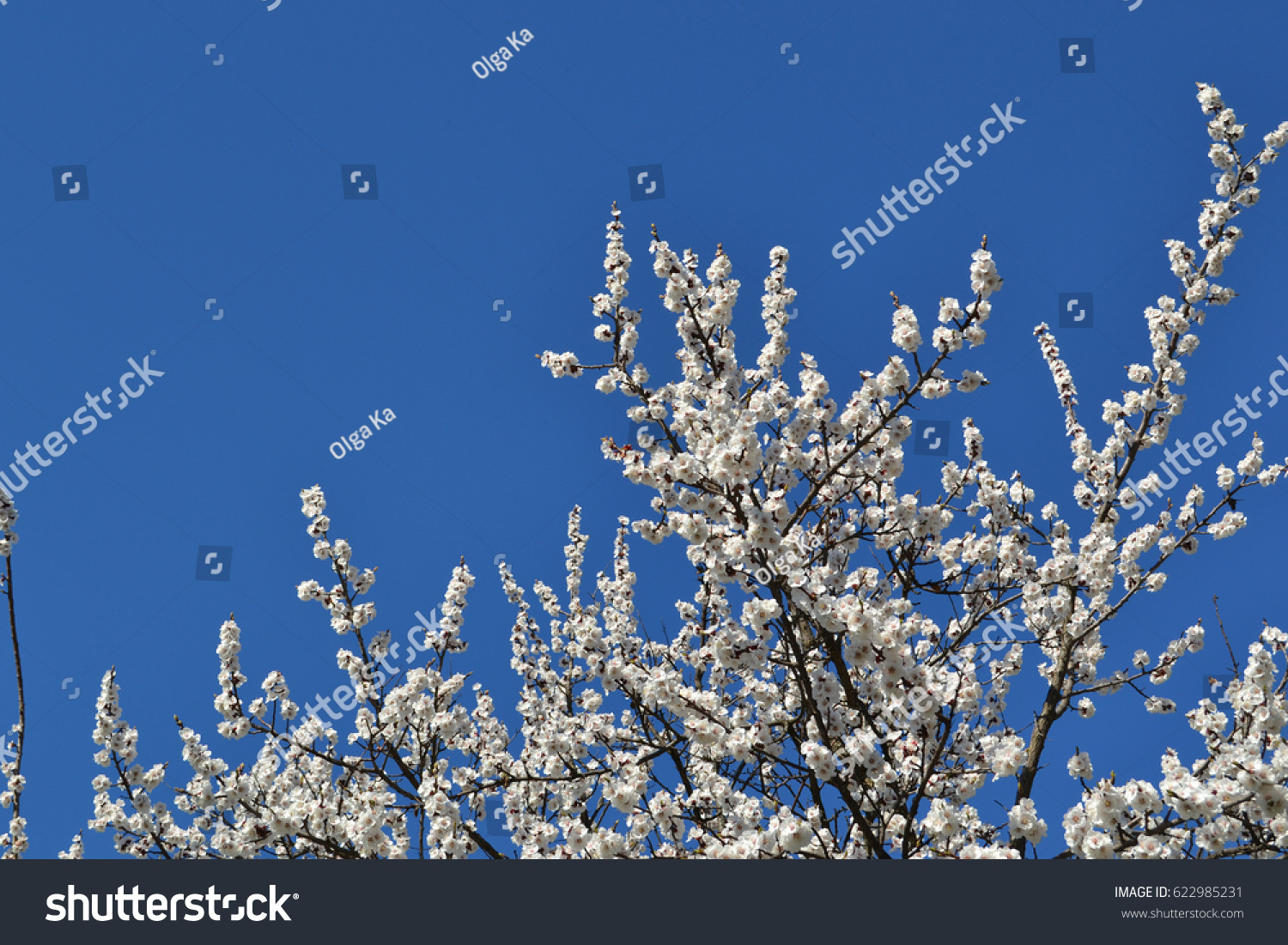 Flowering of trees in spring against a clear blue sky ez canvas izmirmasajfo