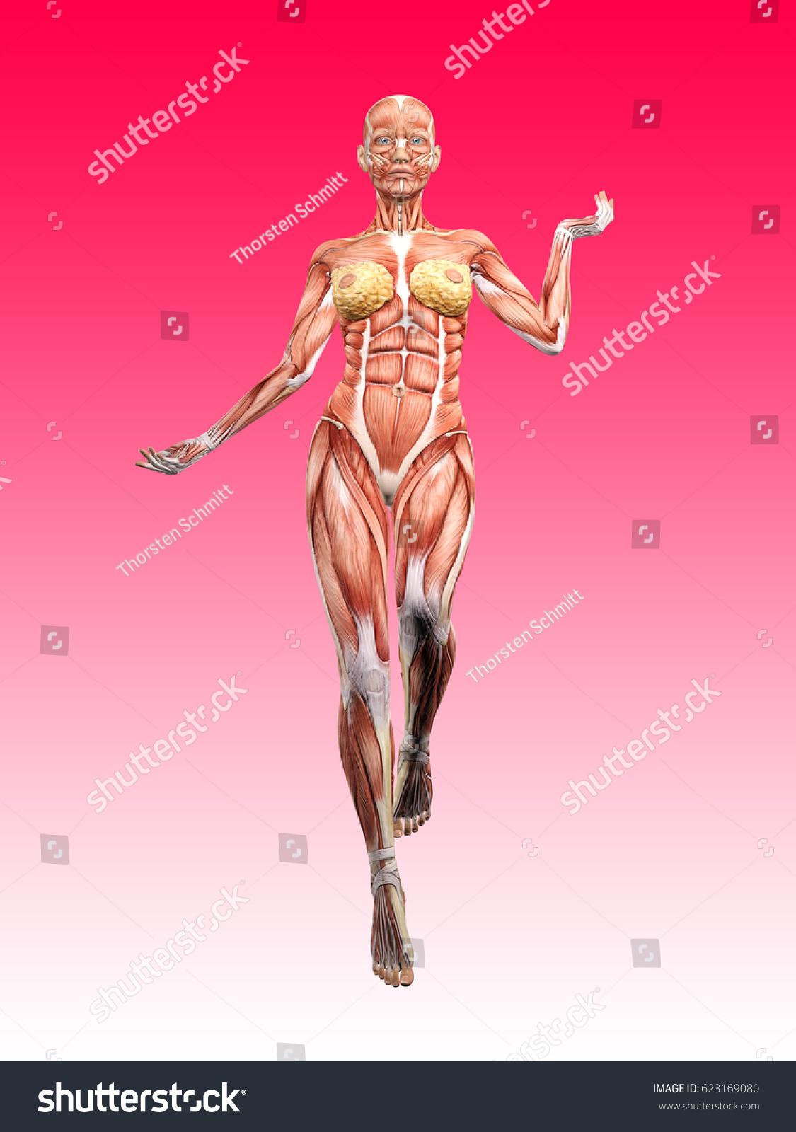 Female Muscle Anatomy Dancing 3 D Illustration Stock Illustration