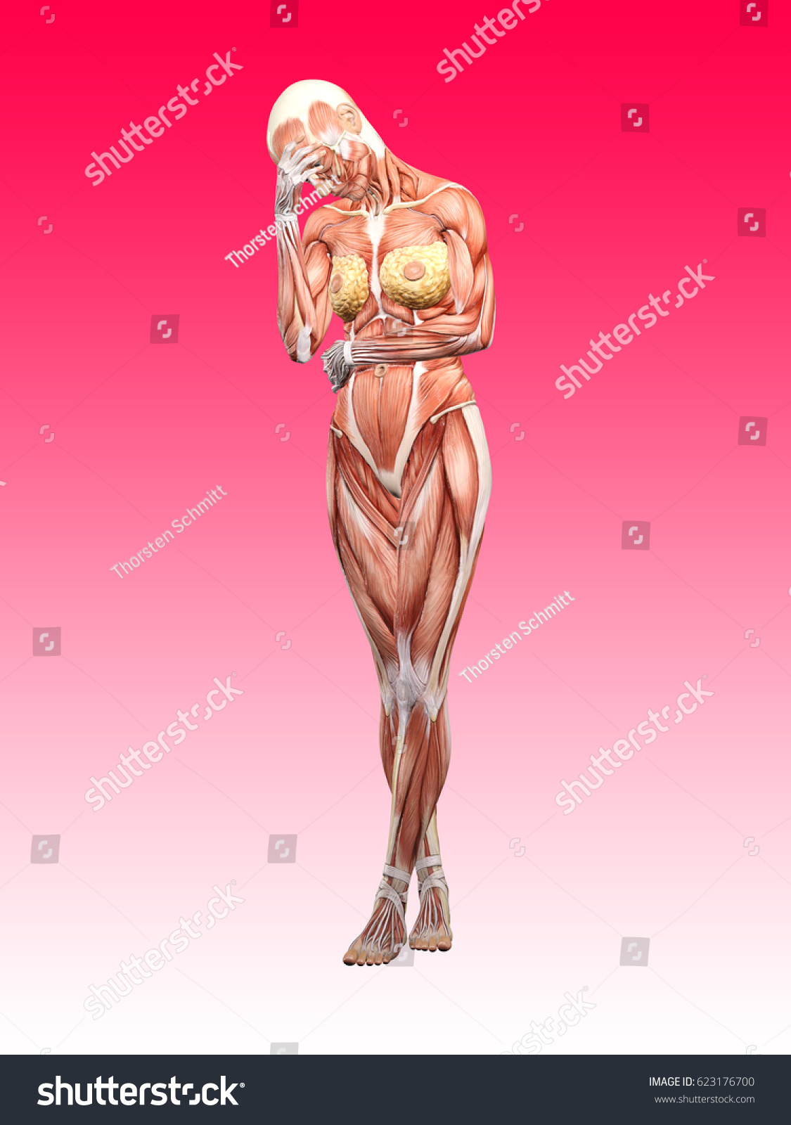 Female Muscle Anatomy Depressed Exhausted 3 D Stock Illustration