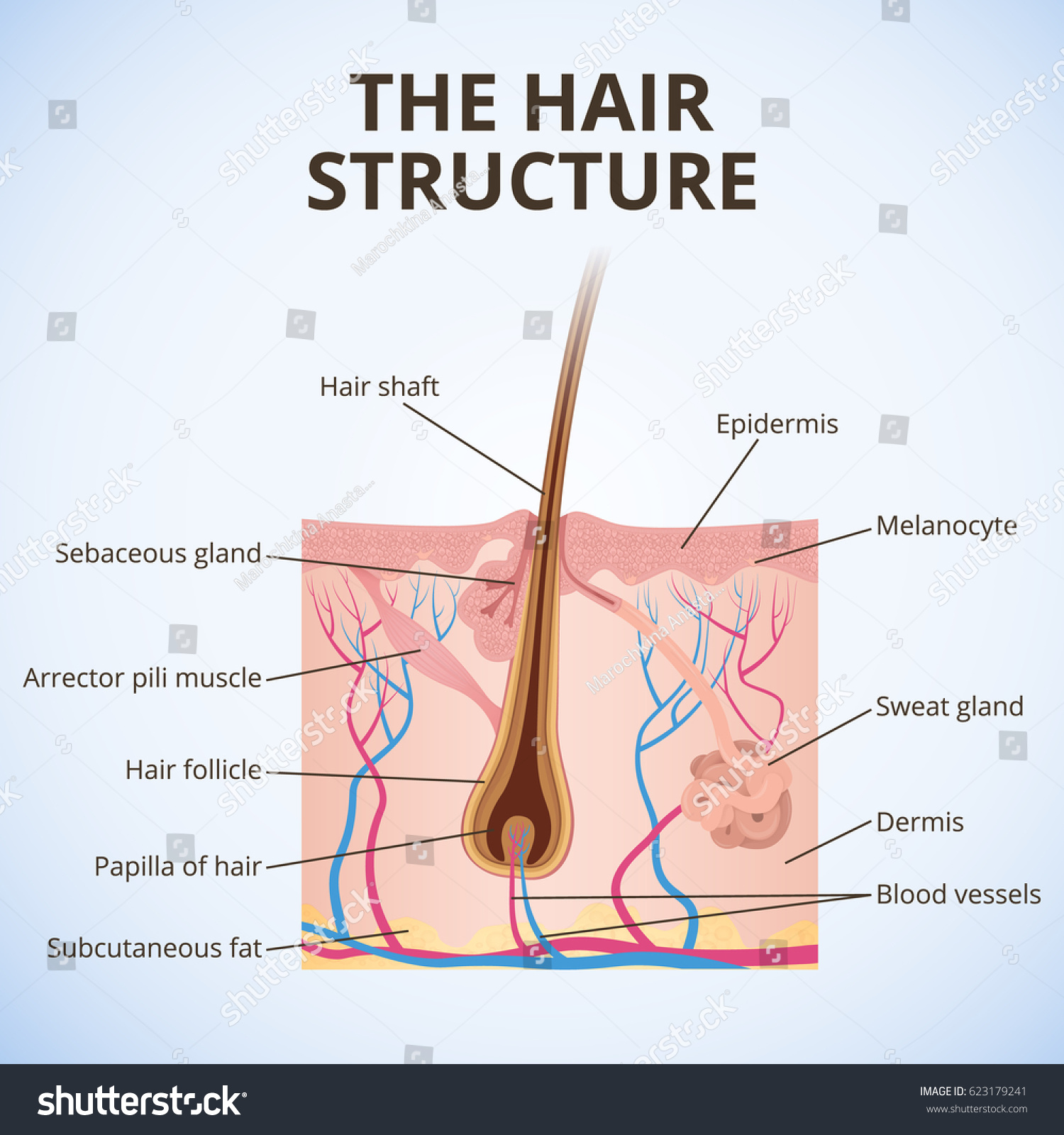 Structure Hair Illustration Structure Hair Hair Stock Vector ...