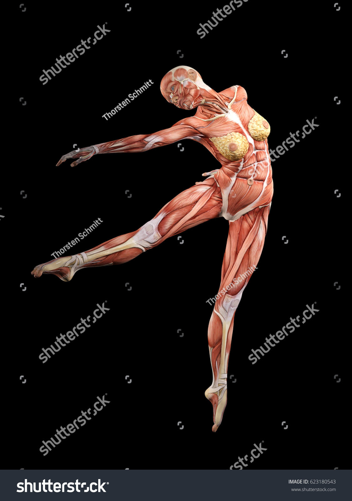 Ballet Anatomy Diagram - Electrical Drawing Wiring Diagram •