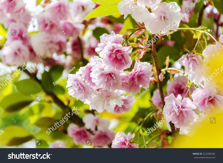 Colorful Spring Flowers Ez Canvas