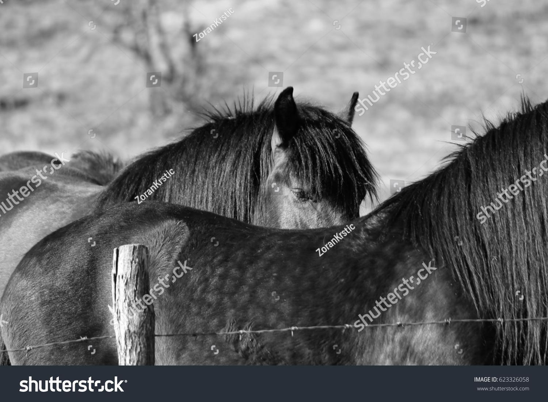 Wild Horses Mountains Details Black White Stock Photo Edit Now 623326058