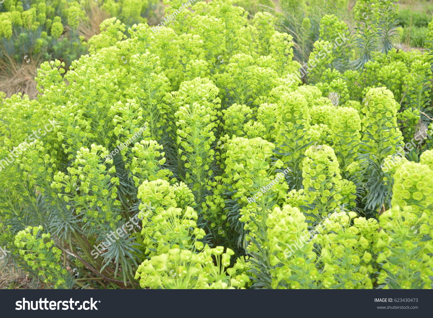 Bright Green Plants Growing Soil Stock Photo Edit Now 623430473