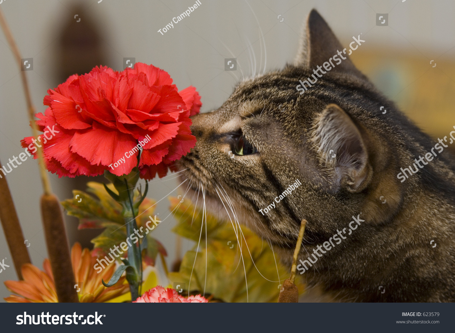 Cat Smelling Bouquet Flowers Stock Photo Edit Now 623579