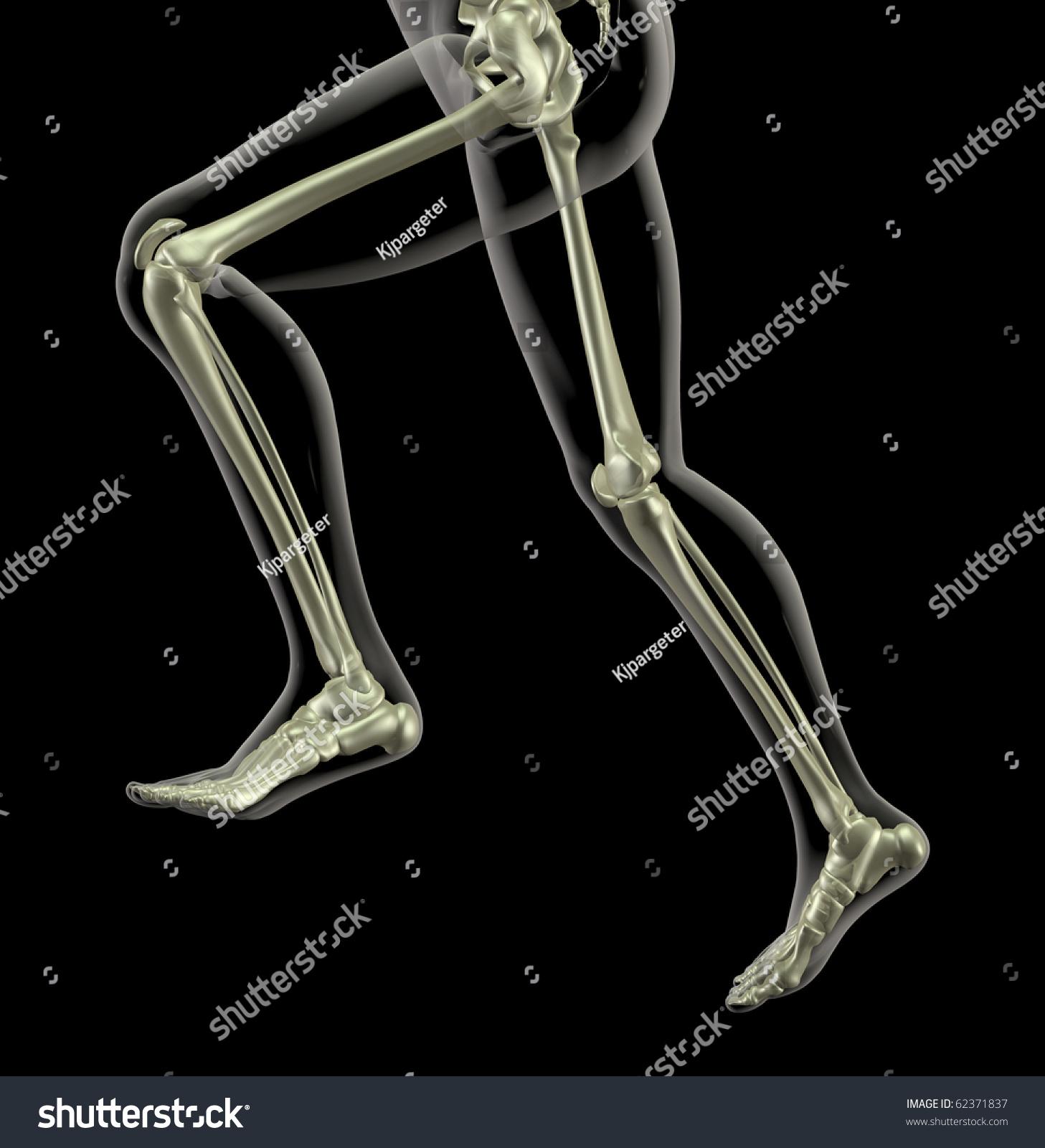Medical Skeleton Legs Running Stock Illustration 62371837 Shutterstock
