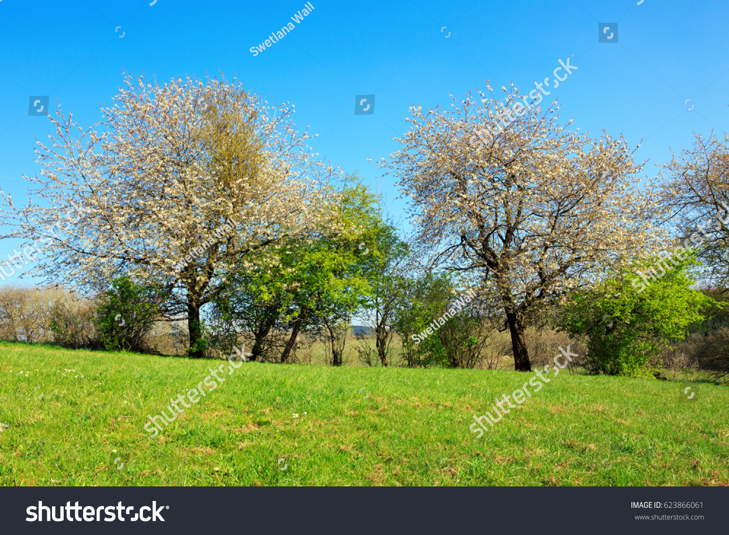 Flowering trees on meadow and blue sky ez canvas id 623866061 izmirmasajfo