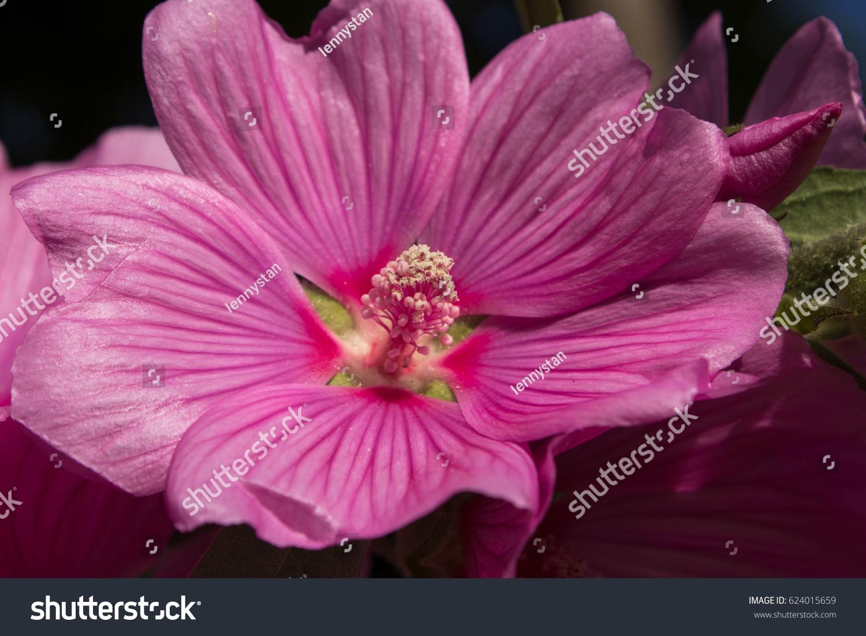 stock-photo-wild-pink-flower-in-bloom-62