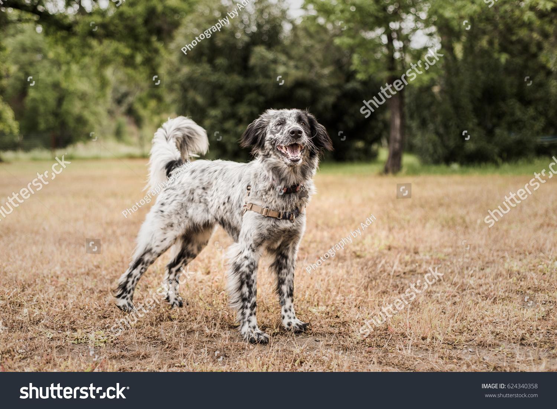 Sedona Adorable Adoptable Young Dog That Stock Photo (Edit