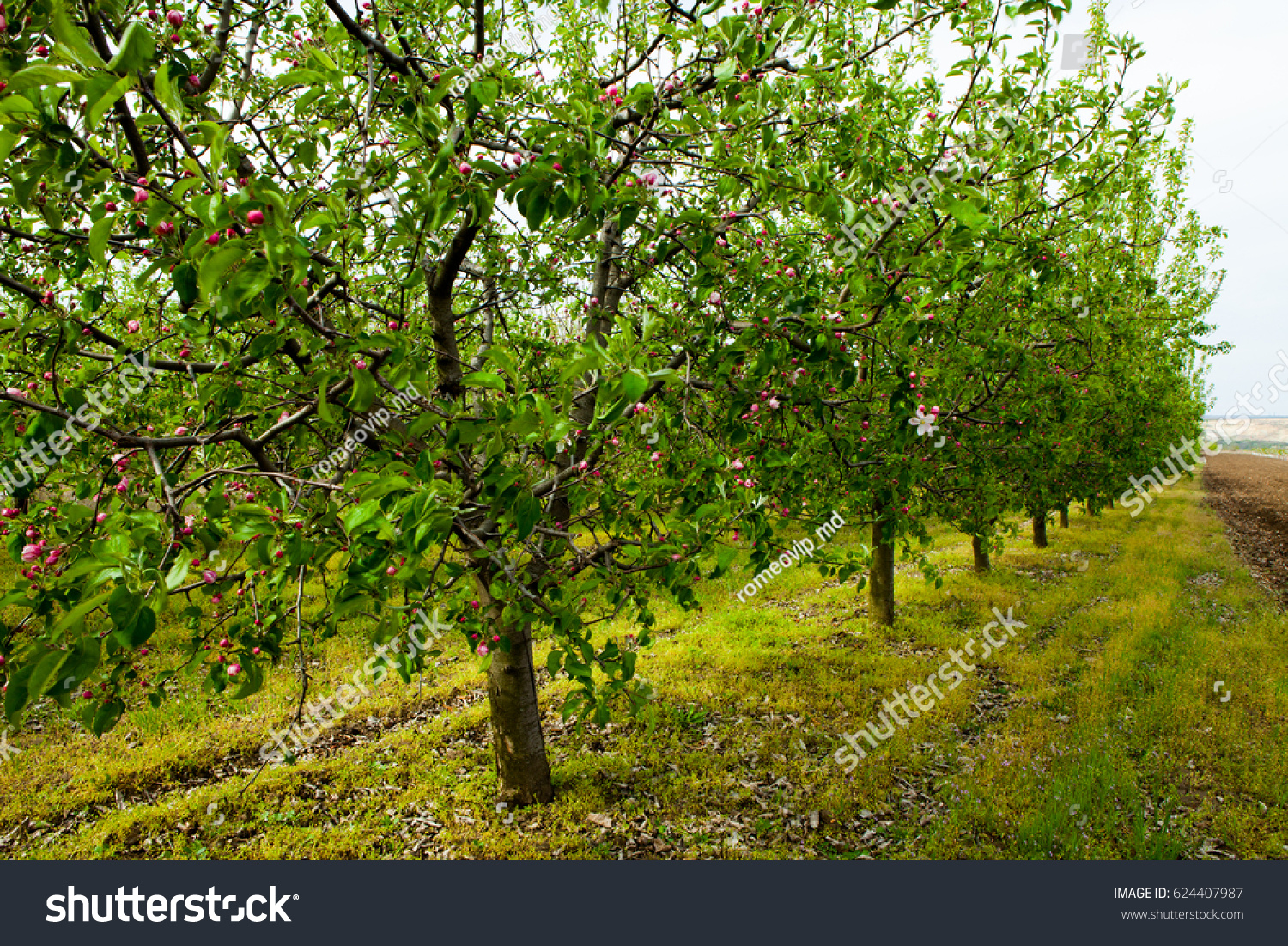 Cherry Blossom View Flowering Cherrytrees Branch Stock Photo