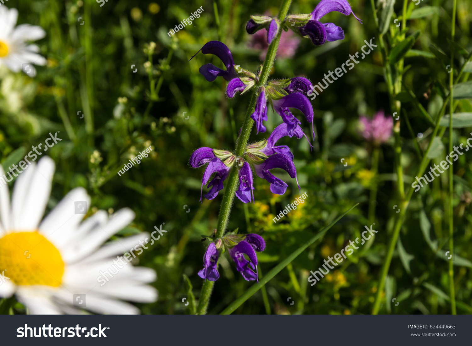 On Very Sunny Summer Day Variety Stock Photo Edit Now 624449663