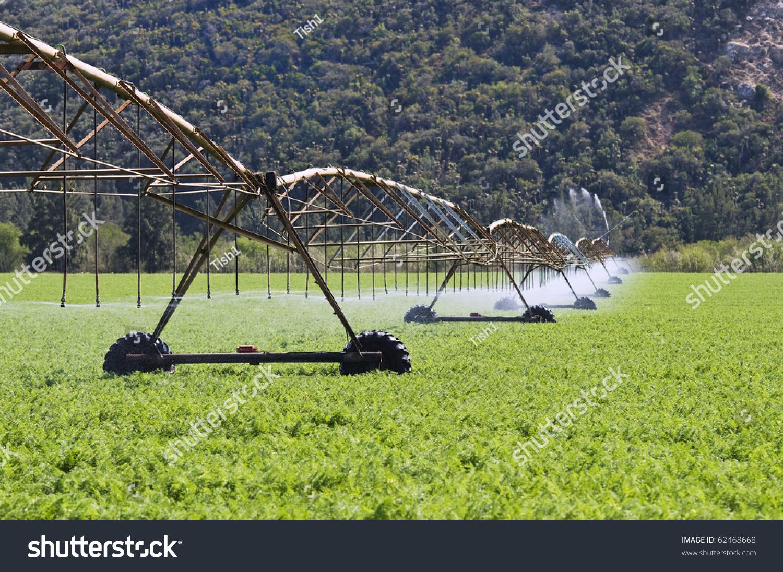 Modern Irrigation System Watering Carrot Farm Stock Photo 62468668 ...