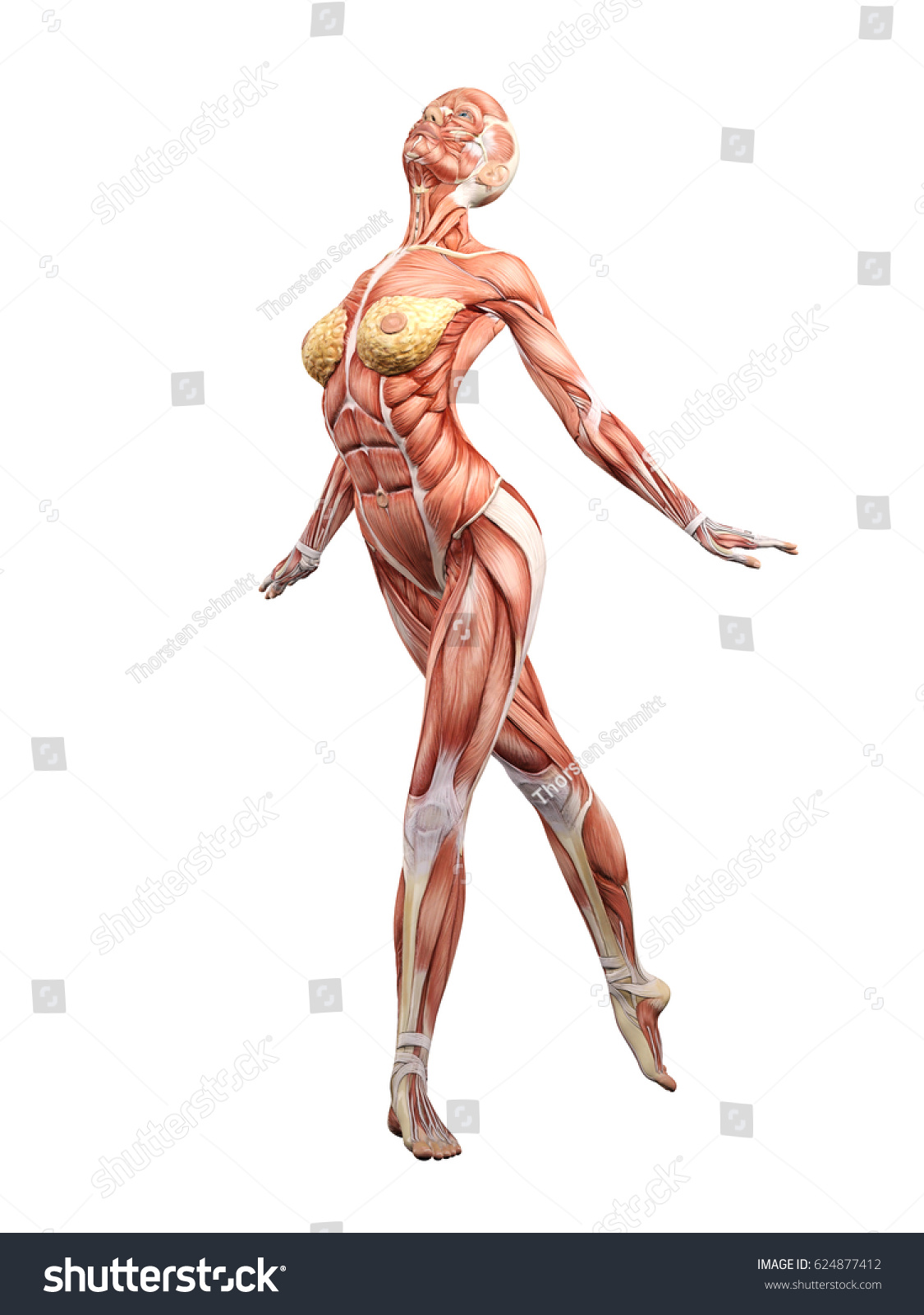 Female Muscle Anatomy Dancing 3 D Illustration Stockillustration