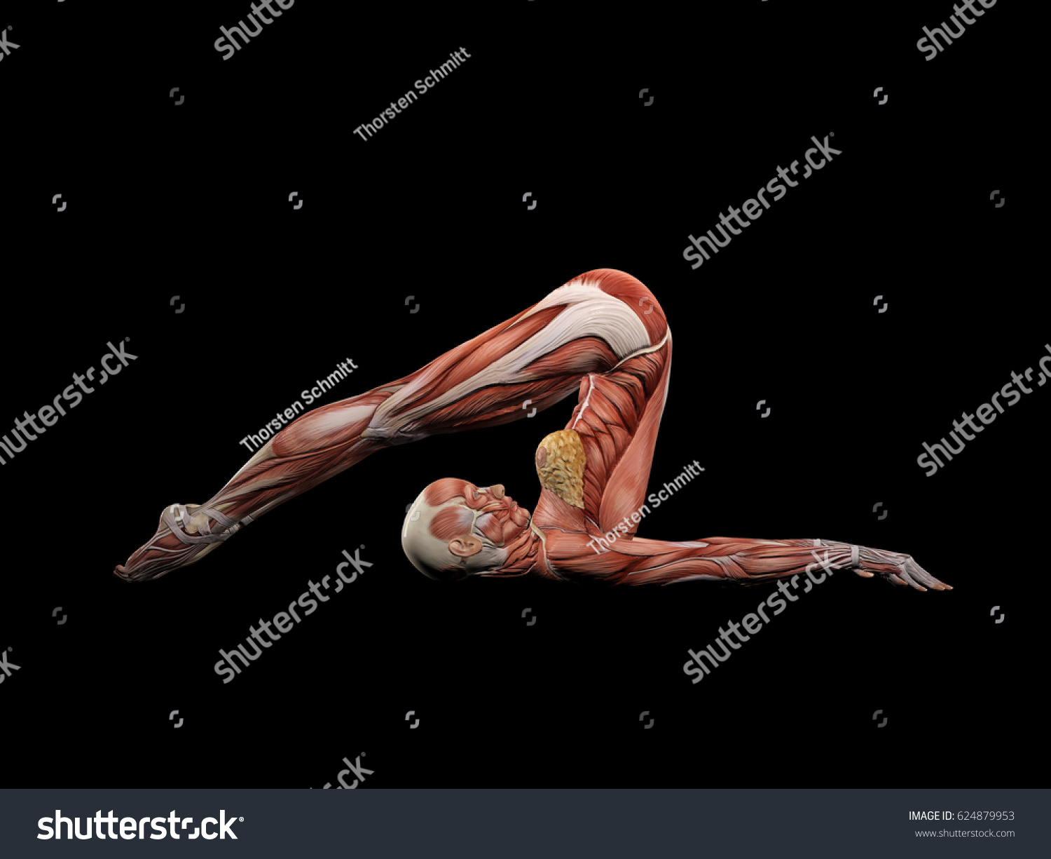 Female Muscle Anatomy Doing Yoga 3 D Stock Illustration 624879953 ...