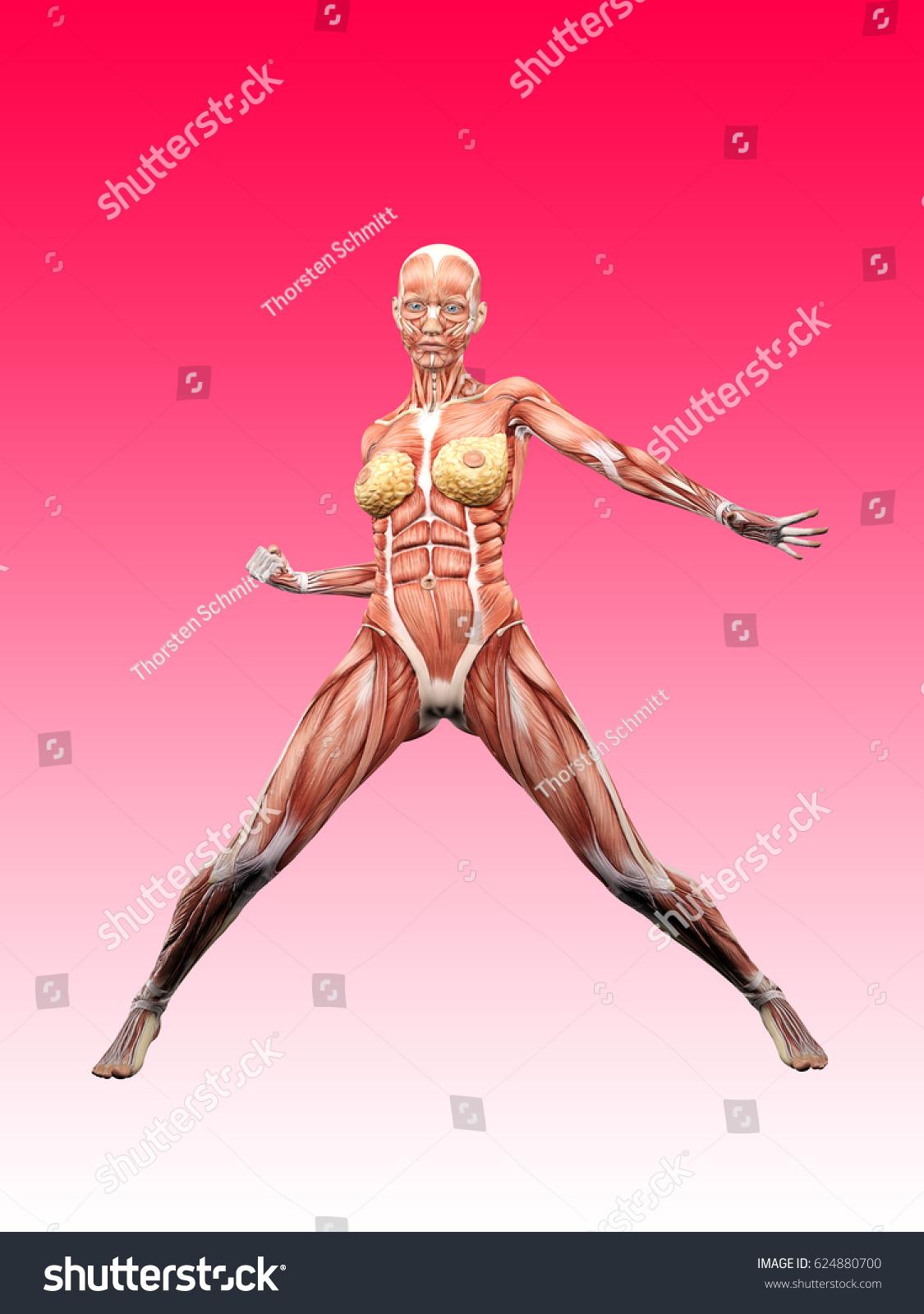 Female Muscle Anatomy Posing 3 D Illustration Stockillustration