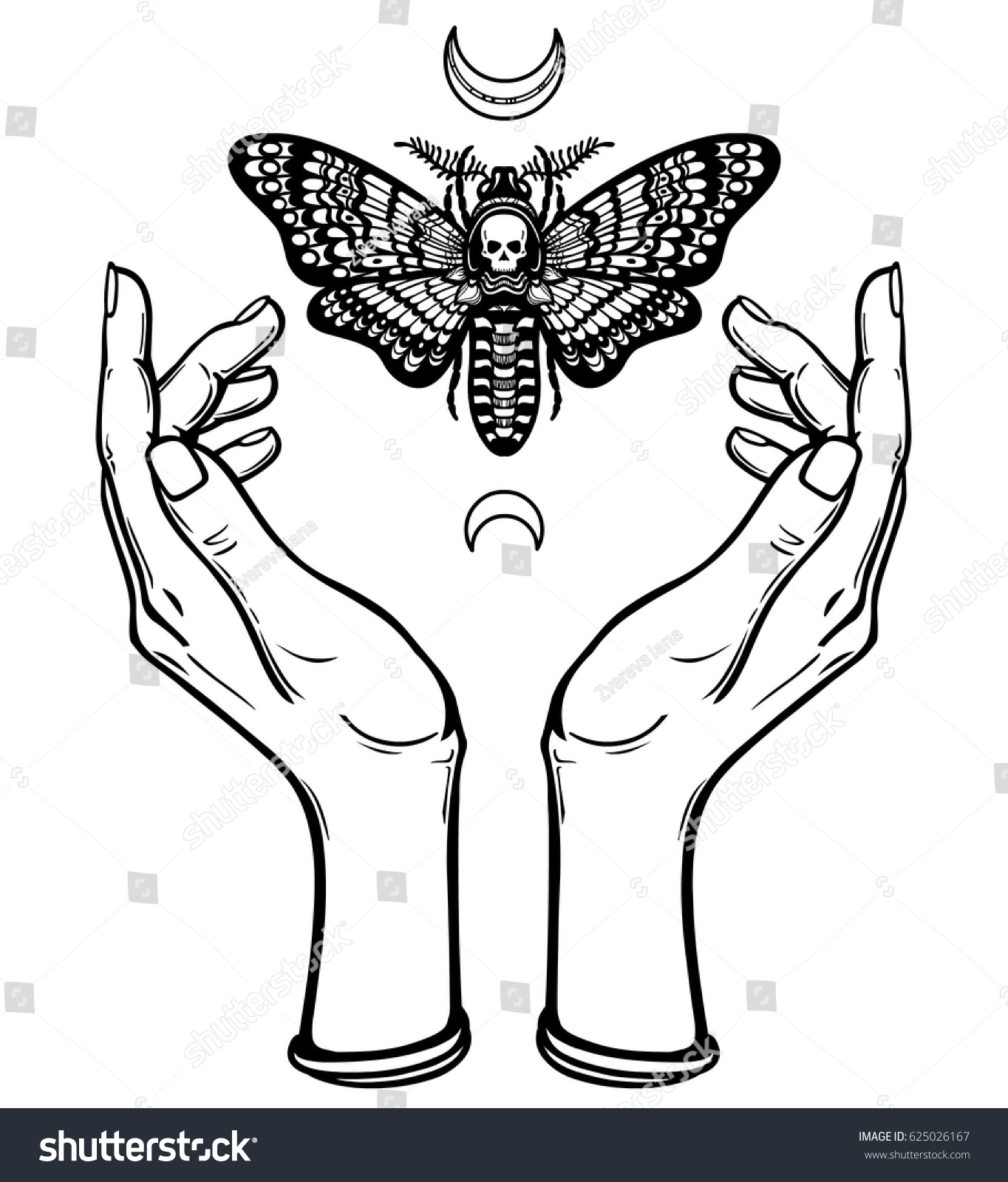 Human Hands Hold Moth Dead Head Stock Vector Royalty Free