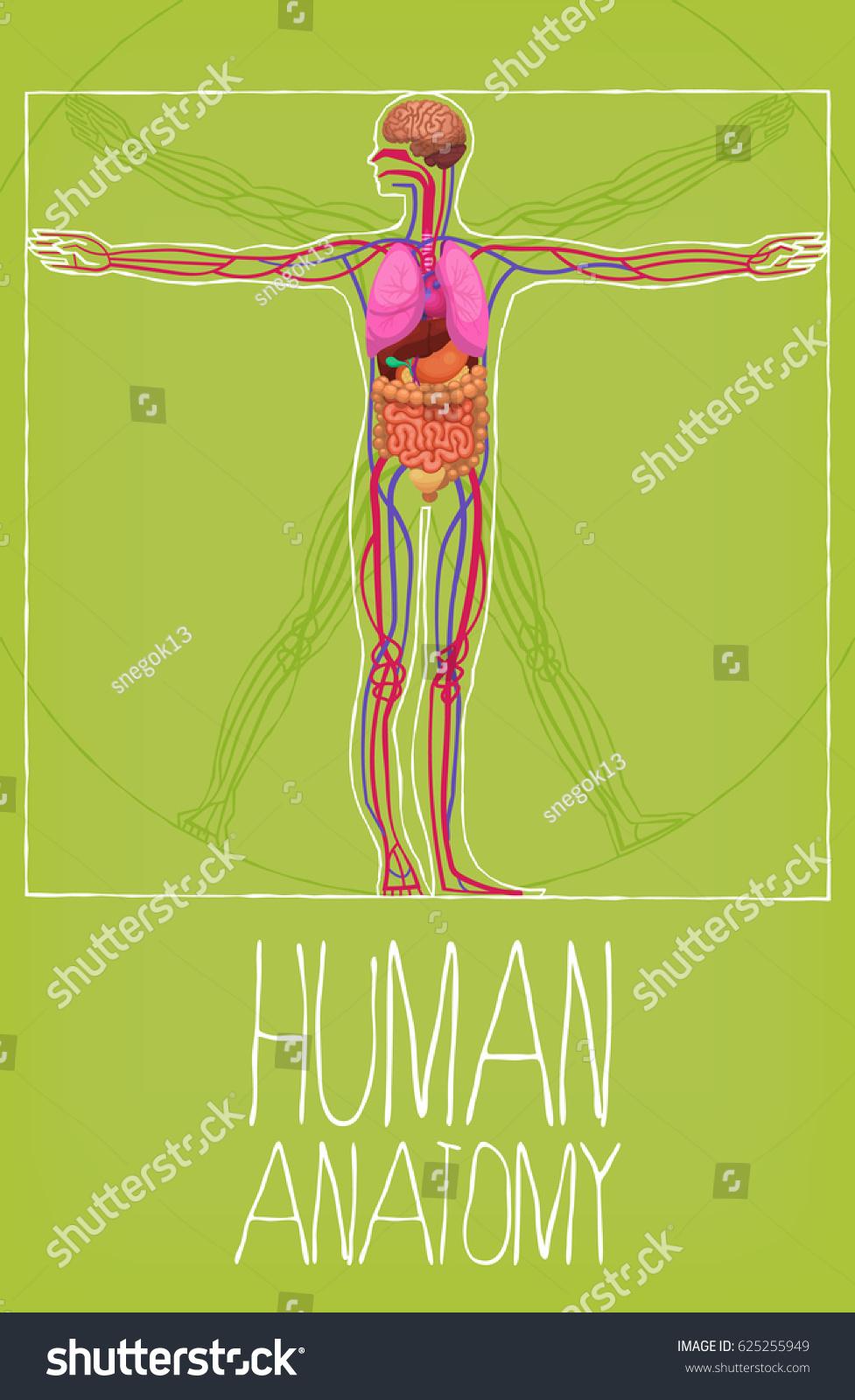Human Body Organs Poster Vetruvian Man Stock Vector Royalty Free