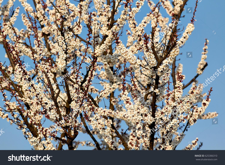 Flowering Trees In Spring Ez Canvas