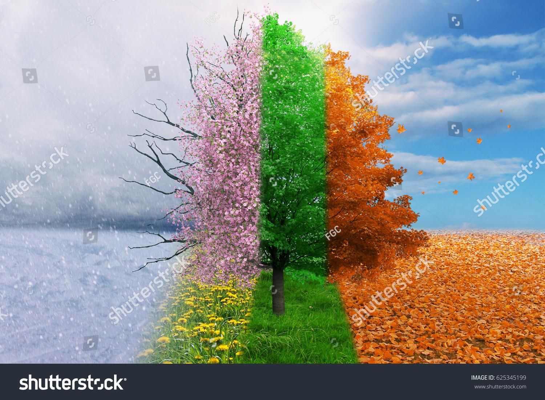 Four season tree magical, nature #625345199