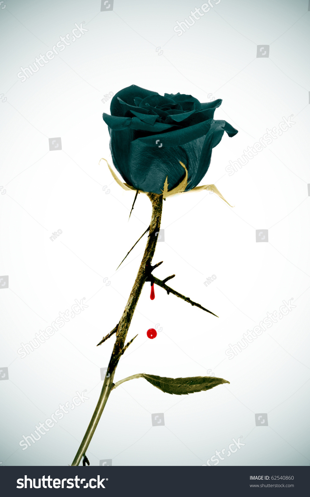 Black rose on emo background blood stock photo 62540860 - Emo rose pictures ...