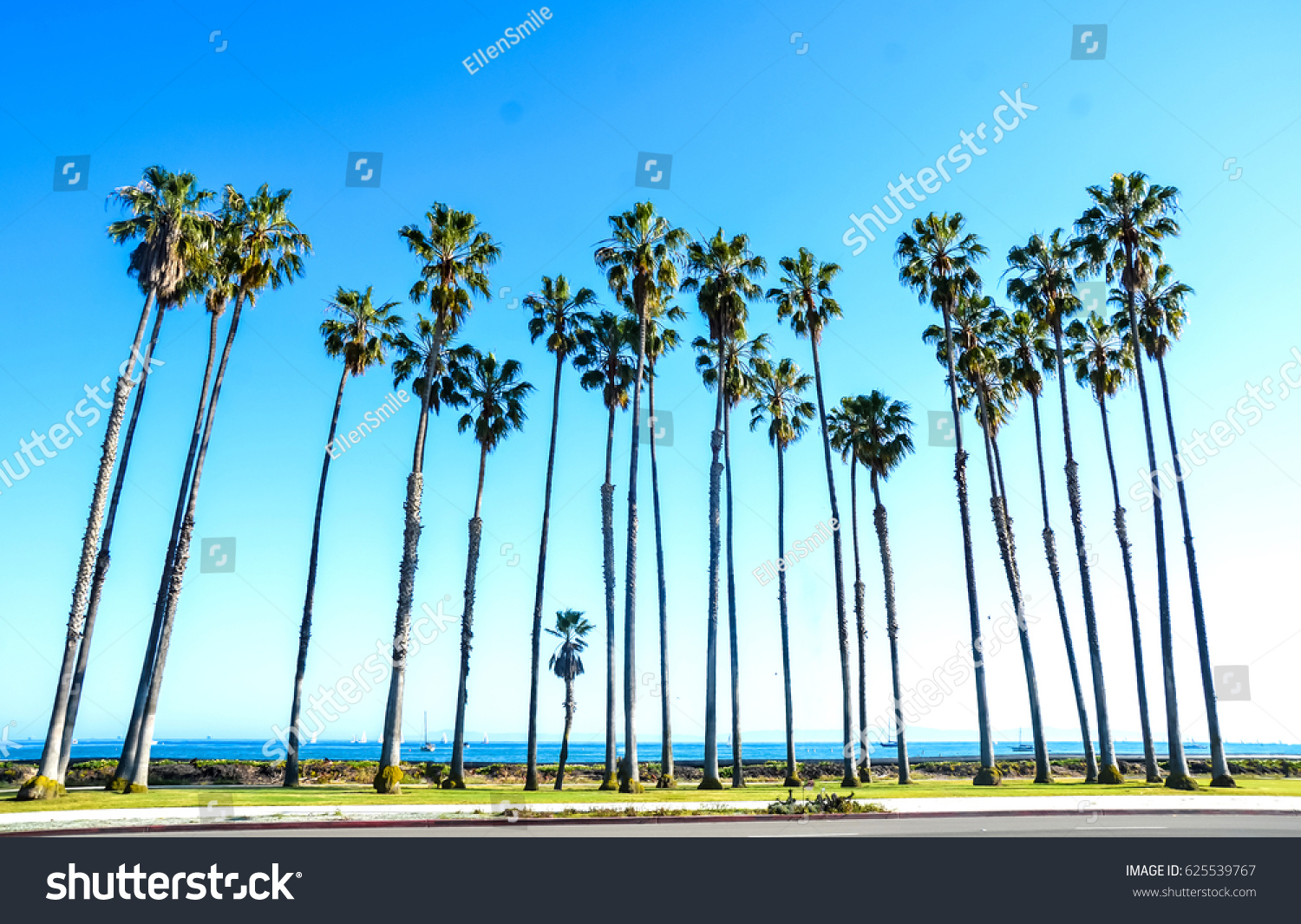 California Hight Palm Trees On The Beach Near Ocean Blue Sky Background Santa