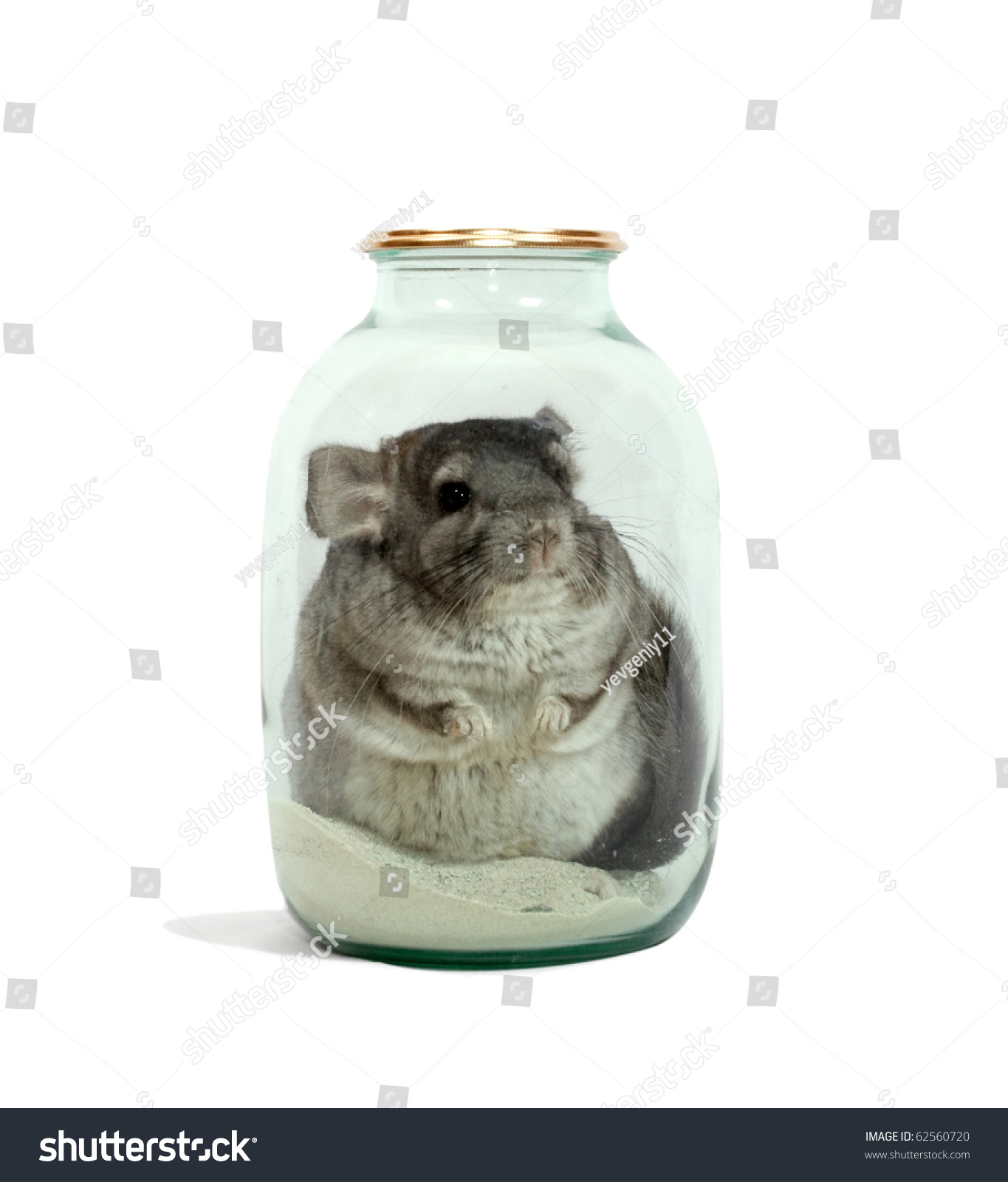 the chinchilla bathes in sand in a glass jar stock photo. Black Bedroom Furniture Sets. Home Design Ideas