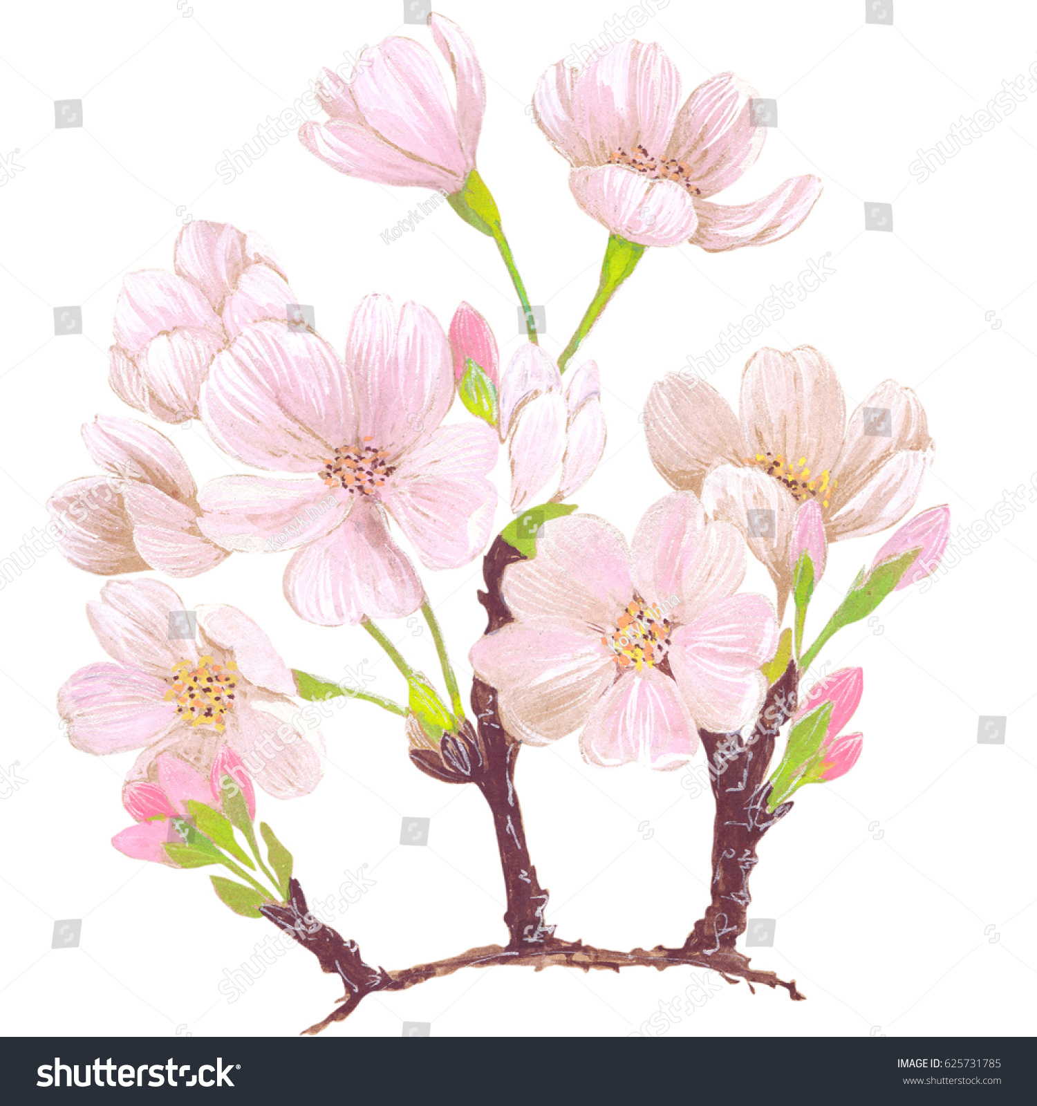 Flowers Cherry Tree On White Background Abstract Stock Illustration