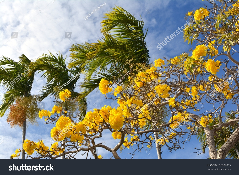 Yellow flowers palm trees against blue stock photo 625809065 yellow flowers and palm trees against a blue sky mightylinksfo Gallery