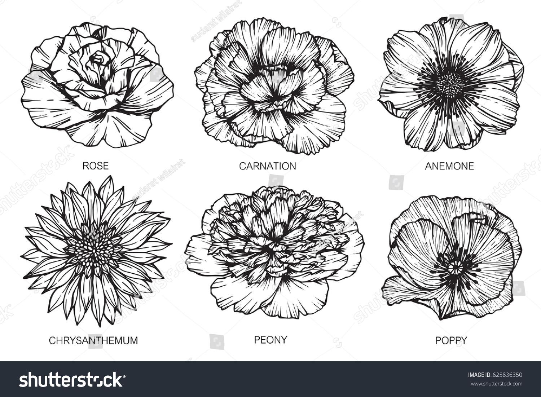 Rose Carnation Anemone Chrysanthemum Peony And Poppy Flowers