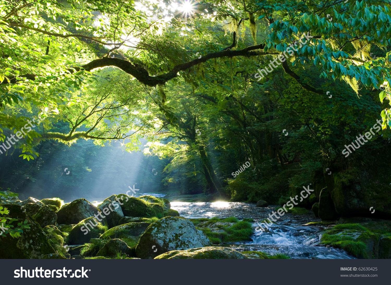 Virgin Forest Shaft Beam Light Stock Photo 62630425 - Shutterstock
