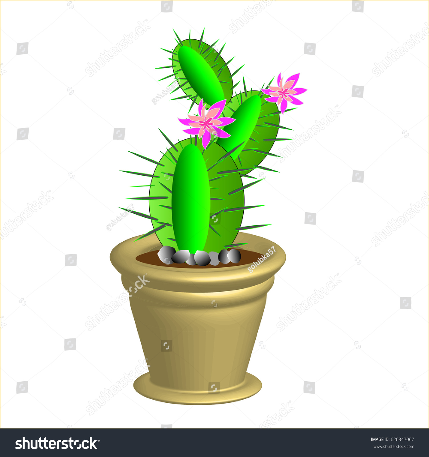 Round Green Cactus Pink Flowers Pot Stock Vector Royalty Free