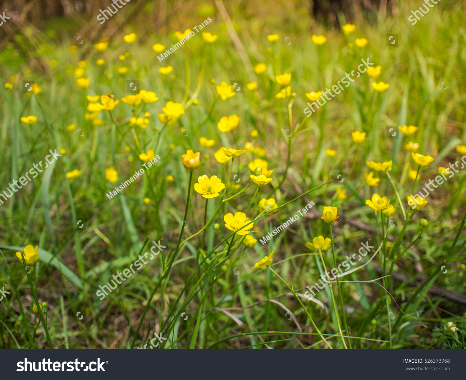 Midsummer Countryside Meadow With Flowers Abstract Close Up Neutral